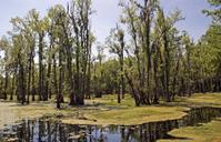 Wetlands Near Charleston South Carolina