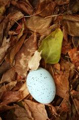 Find an Egg