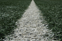 White line of turf