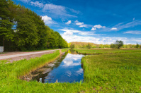 dutch landscape - polders and forest