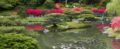 Oriental Water Garden
