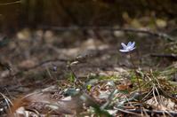 tiny little forest flower