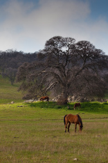 Fields, Trees and Horses