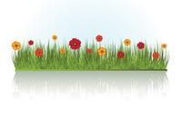 summer floral grass