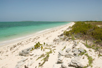 Tropical Beach Scene, Deserted