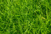 beautiful bright green blades of grass abstract background