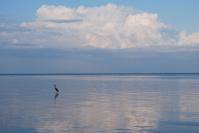 Bird at Peace