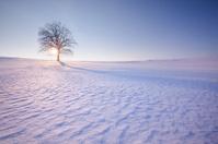 lonely tree in winter landscape - leftside