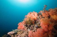 Soft Coral Garden