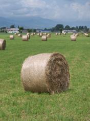 Hay bales on grassy plain