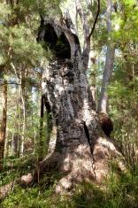 Mighty funny tree