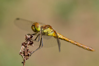 Dragonfly anonymously.