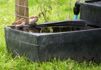 bird bath you first
