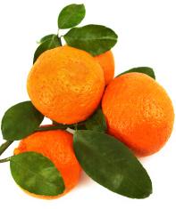Mandarines Citrus Fruit