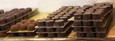 Handmade chocolate on trays