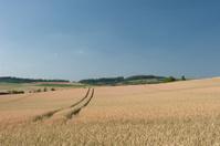 VS, Donaueschingen,Lines in the cornfield