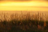 Grass In The Last Evening Sun