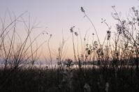 Lagoon vegetation at sunrise