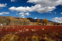 Red Grass Shoal