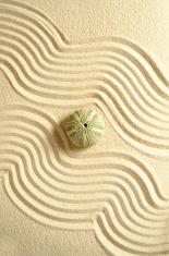 Urchin in sand