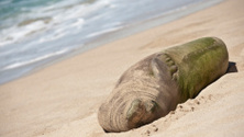 Hawaiian Monk Seal Laying on Beach in Maui