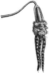 voodoo wand
