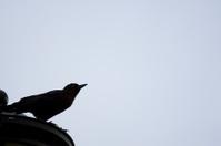 Dark bird perched on a ledge against clear, blue sky