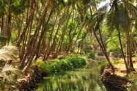 Agonda backwater,Goa,India.