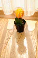 Cactus on the floor