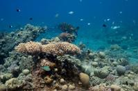 in underwater garden