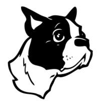 Boston Terrier (Vector Illustration)
