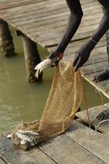 African fishing