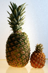 size matters - pineapples