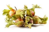 Some hazelnuts