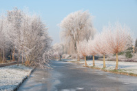 Frost on a small canal in dutch winter time
