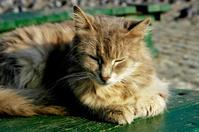 sleepnig cat