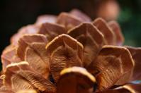 pinecone macro