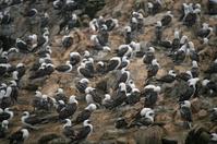 Birds at the Ballestos Islands