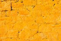 Lichen on sea wall,Jersey.
