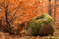 stone in forest