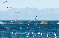Gull Bay Cape Town