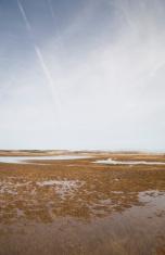 Marsh in mist