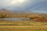 New Mexico Landscape