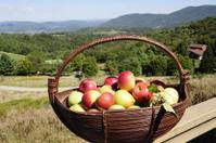 basket of mountain apples