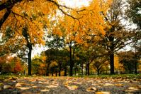 Yellow leaves falling in Kansas
