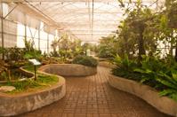 Garden in glass house