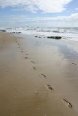 footprints along the beach sand