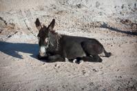 Donkey lying on the ground