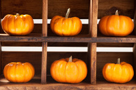Six Small Pumpkins in Decorative Crate on White