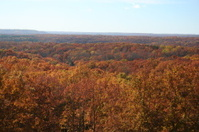 Valley of Red and Orange Autumn Trees